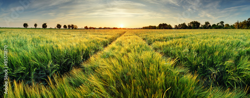 Papiers peints Miel Rural landscape with wheat field on sunset
