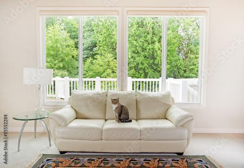 Family cat enjoying sofa within living room