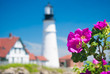 Wild Roses At Portland Head Lighthouse