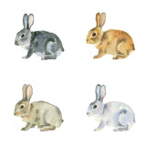 Watercolor painting. Black, red, white and brown rabbits