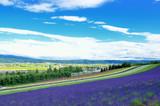Fototapeta 北海道 富良野の夏とラベンダー