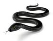 Black Snake Isolated on White Background