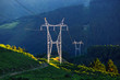 electric pole in nature