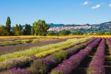 Campo di lavanda nei pressi di Assisi in Umbria