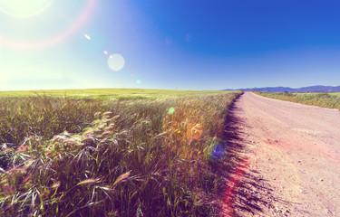 Paisaje de puesta de sol.Hierba verde, cielo azul y camino. Aventura y paseo por el campo