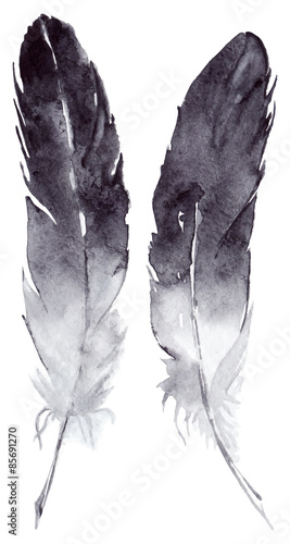 Watercolor vector feather pair set isolated - 85691270