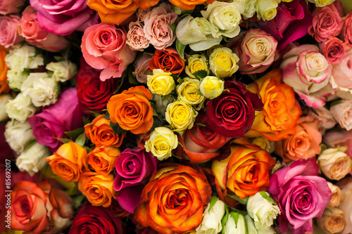 Fototapeta  beautiful bouquet of multicolored roses