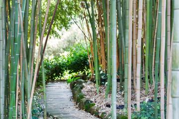 bamboo forest © Maksim Shebeko