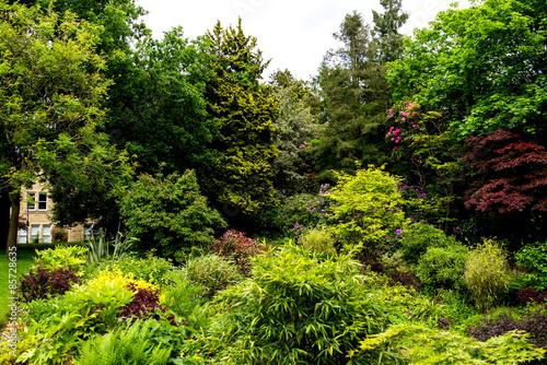 Fototapeta Beautiful English Garden in Summer