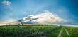sugarcane field,  panorama landscape