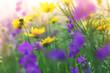tender vibrant flowers in a meadow