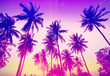 Vintage toned palm trees silhouettes at sunset. - 85763827