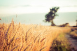 paesaggio di campagna e campi di grano al tramonto