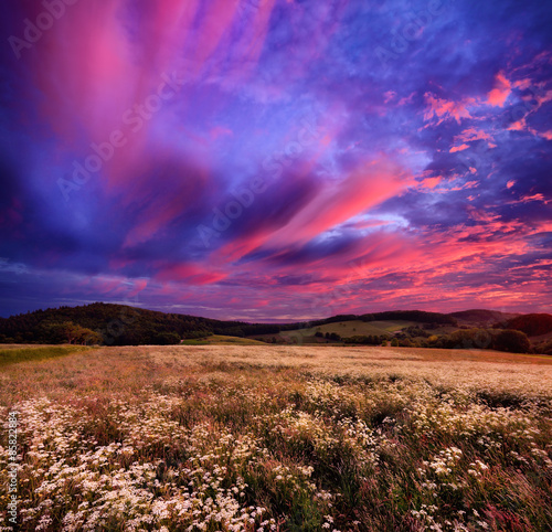 Leinwandbild Motiv Colourful sunrise over blossoming meadows