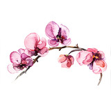 the watercolor flowers orchid isolated on the white background