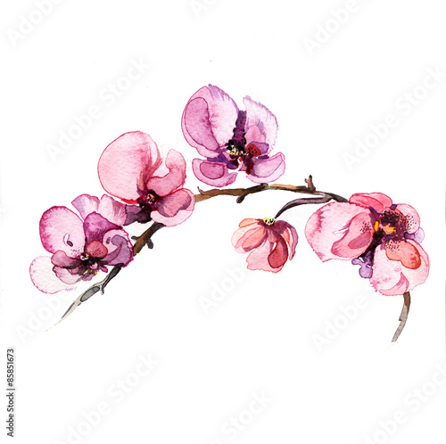 Poster the watercolor flowers orchid isolated on the white background