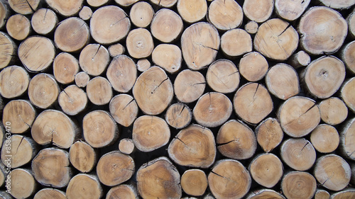 Tuinposter Brandhout textuur background of wood logs