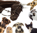 Group of different pets - 85947699