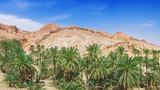 Fototapeta oasis