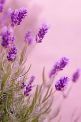 Violette Töne © Ingairis