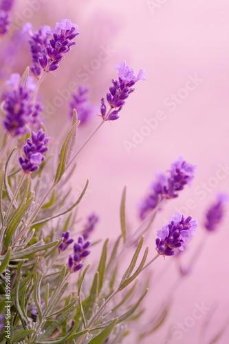 fioletowe-odcienie