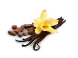 Fototapety Pods of vanilla and cocoa beans with one yellow orchid.