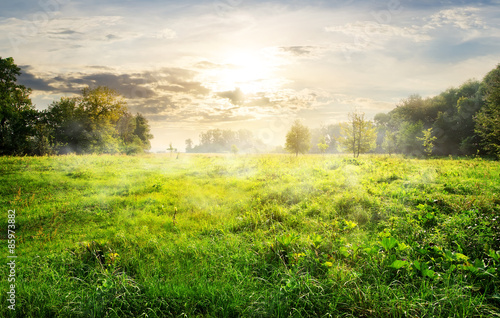 Green meadow at sunrise - 85973882