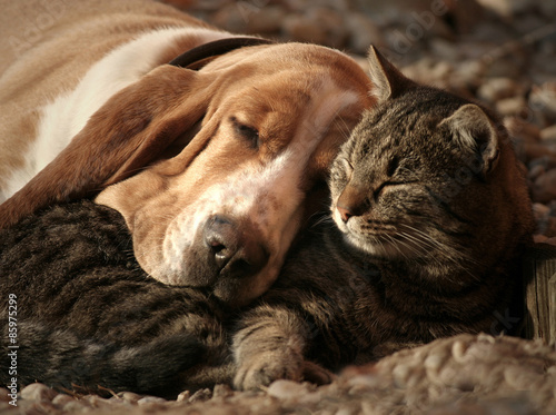 Poster, Tablou Cat pillow, dog blanket