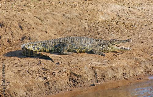 Foto op Plexiglas Krokodil crocodile in Botswana