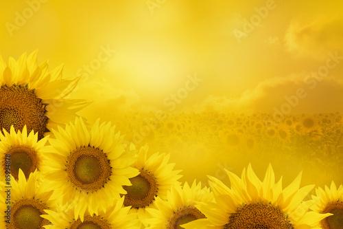 Obraz na Szkle Sunflowers Background