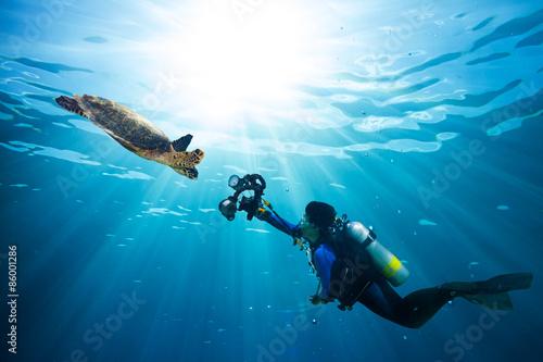 obraz lub plakat nurek wykonuje zdjęcie żółw morski w niebieski ocean