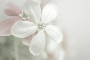 Fototapeta kwiatuszki z delikatną teksturą