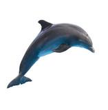 skákání delfínů na bílém