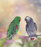 Fototapeta Two Parrots