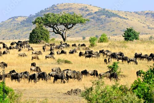 Masai Mara, Kenya © Oleg Znamenskiy