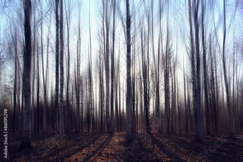 landscape blurred autumn forest