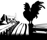Cockerel crowing farm illustration