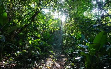 Footpath in the jungle of Costa Rica