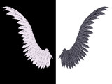 White and Black Wing