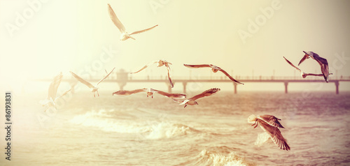 Vintage retro stylized photo of a seagulls, old film effect. - 86193831