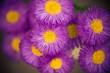 garden flowers background