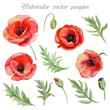 Vector set of red watercolor poppy flowers.