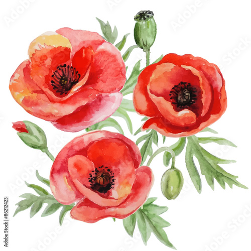Vector bouquet of red watercolor poppy flowers. - 86212423