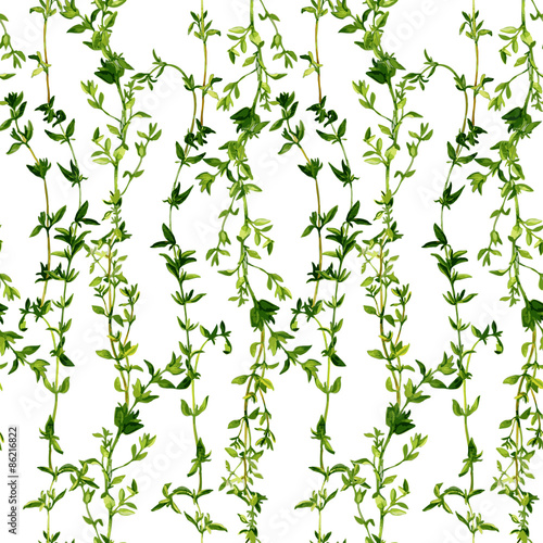 Fototapeta seamless pattern with branches of thyme