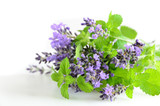 Fototapety lavender and mint on white background