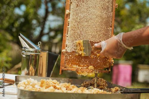 Zdjęcia na płótnie, fototapety, obrazy : beekeeper collects the honey