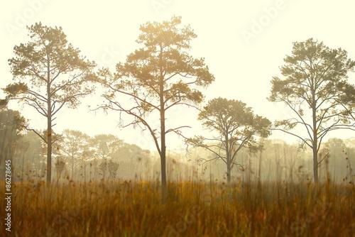 Fototapeta Forest Sunset