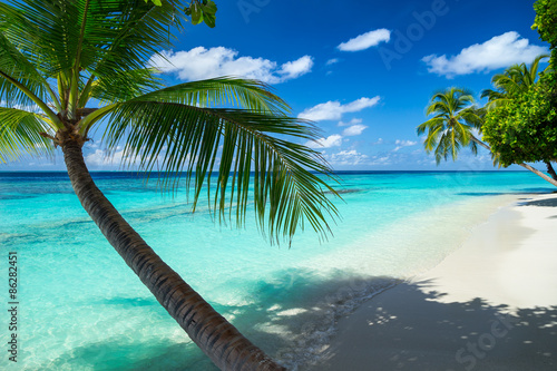 Leinwandbild Motiv coco palm on tropical paradise beach with turquoise blue water and blue sky