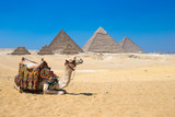 Giza in Cairo, Egypt. - 86286687