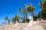 Fototapeta Africa, Egypt, Luxor, Amun Temple of Luxor.